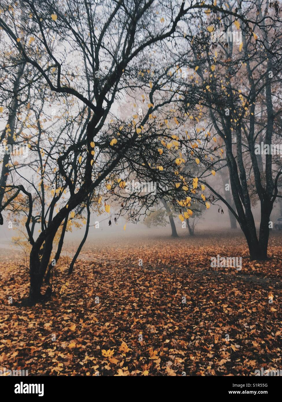 Misterious landscapic scene with trees in autumns fog. - Stock Image