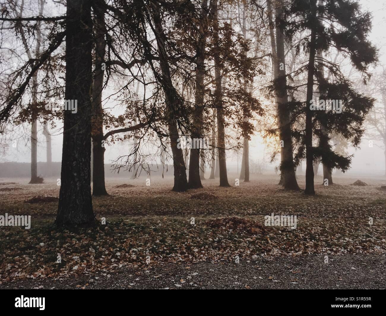 Morning sunrise through the trees. - Stock Image