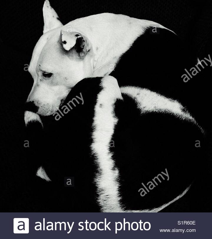 Black and white. - Stock Image