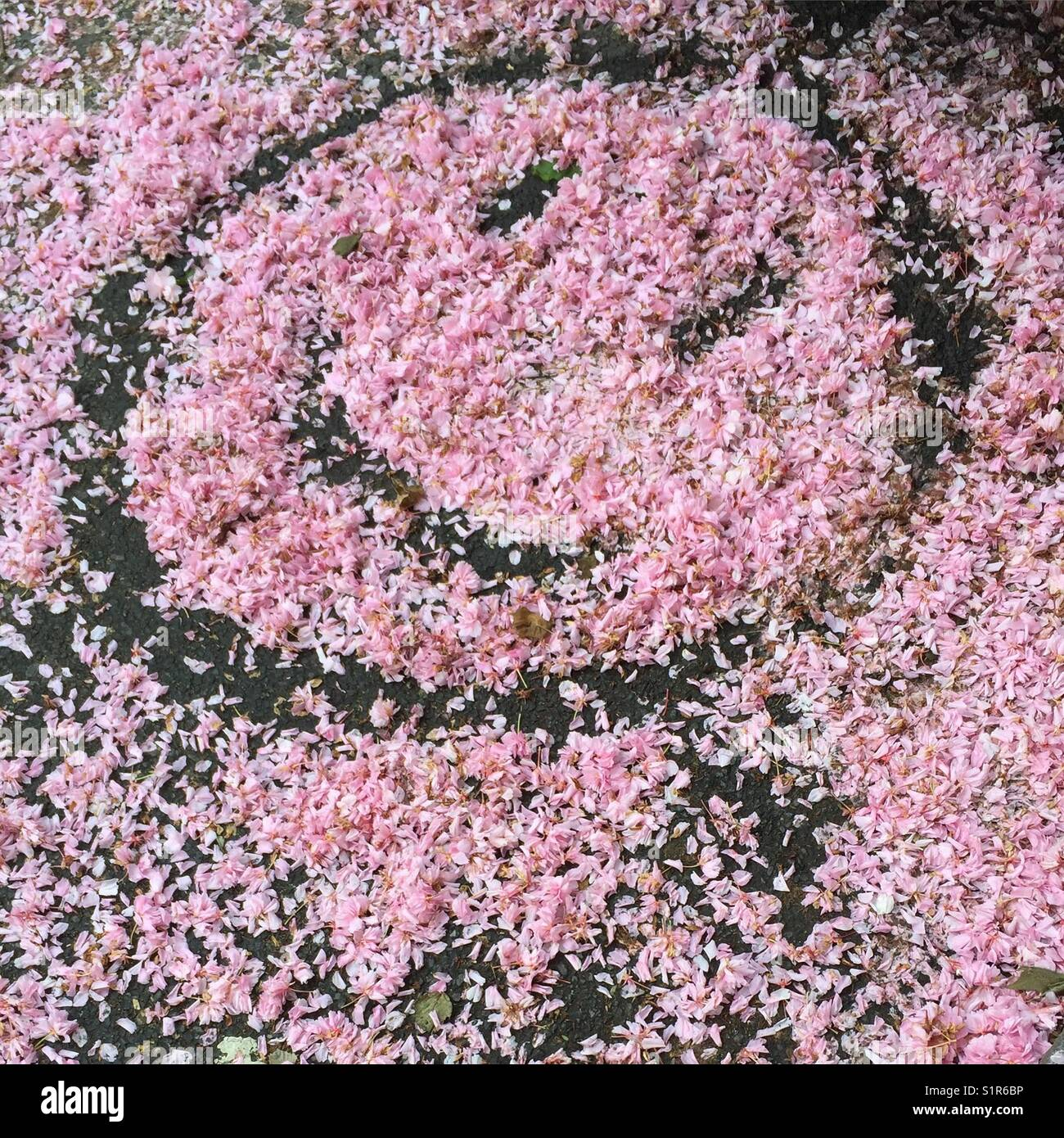 Smiley face petals - Stock Image