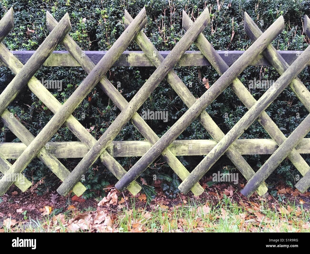 Wooden Lattice Fence   Stock Image