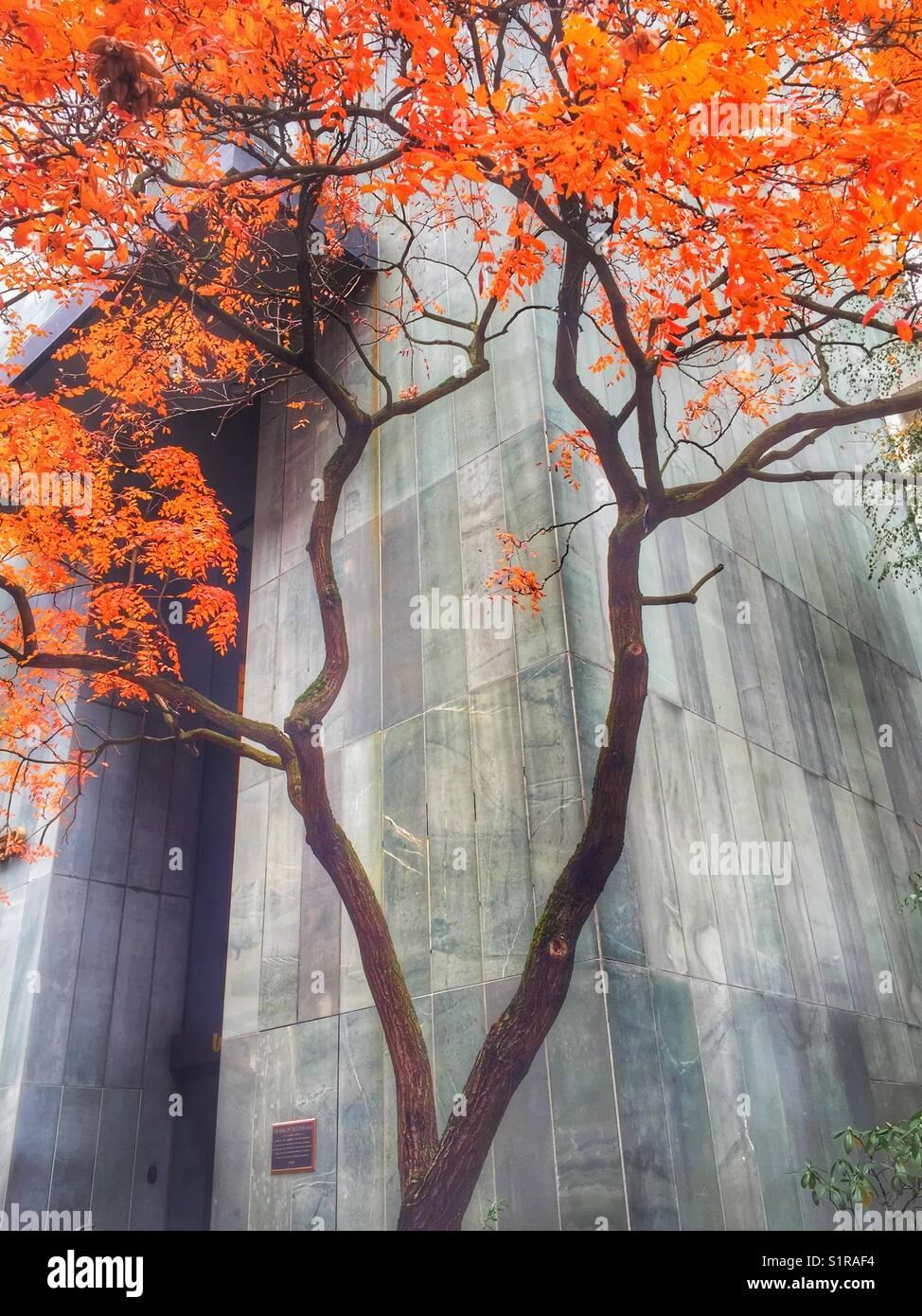 fall colors in portland oregon bright orange autumn foliage stock