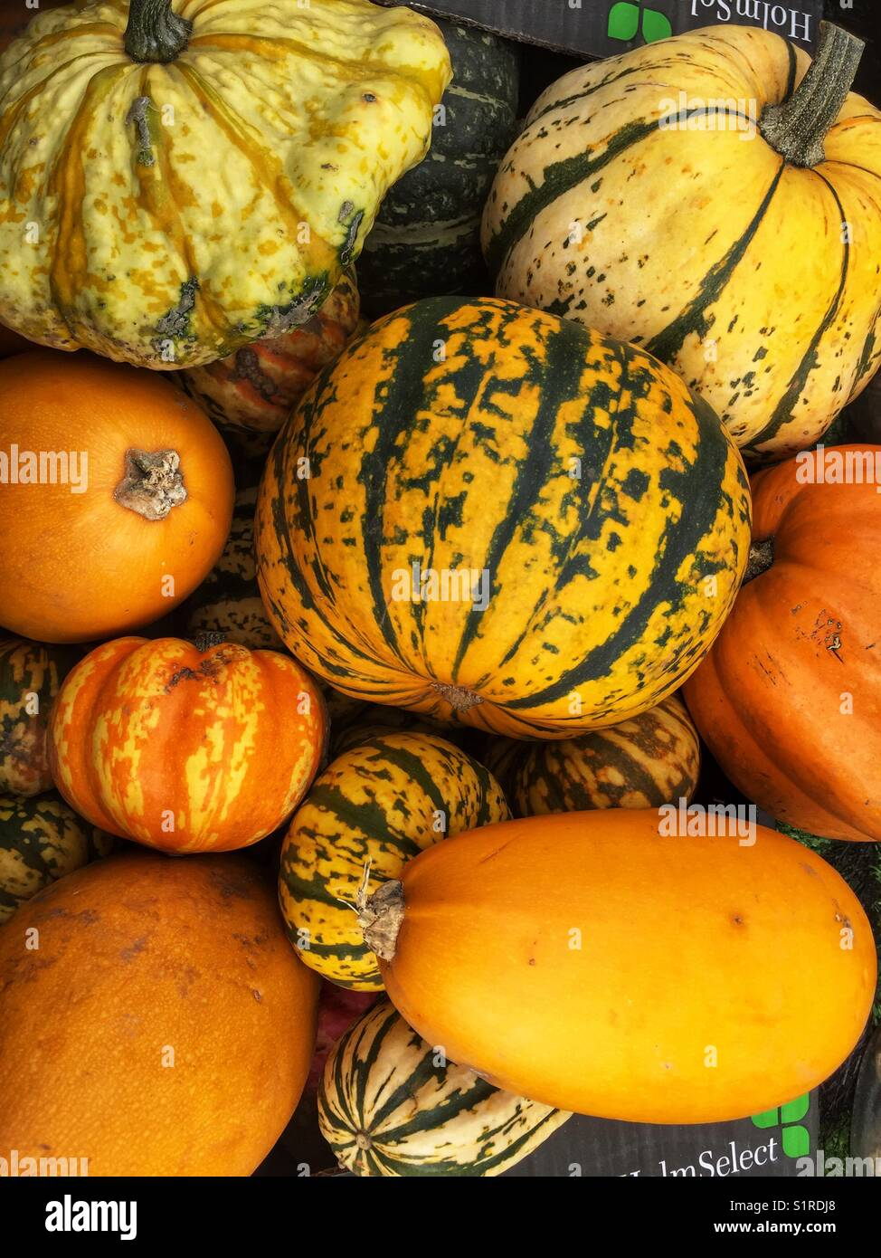 Pumpkins for sale at Portobello Road Market in London, England - Stock Image