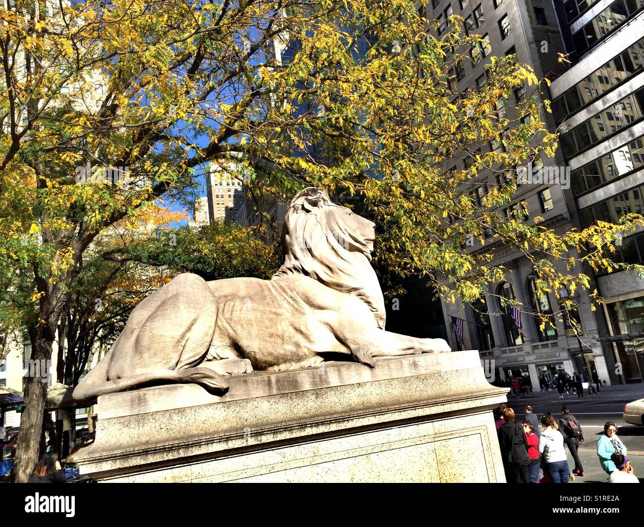 Fortitude the library lion statue in front of the main New York City Public library, 5th Avenue, NYC, USA Stock Photo