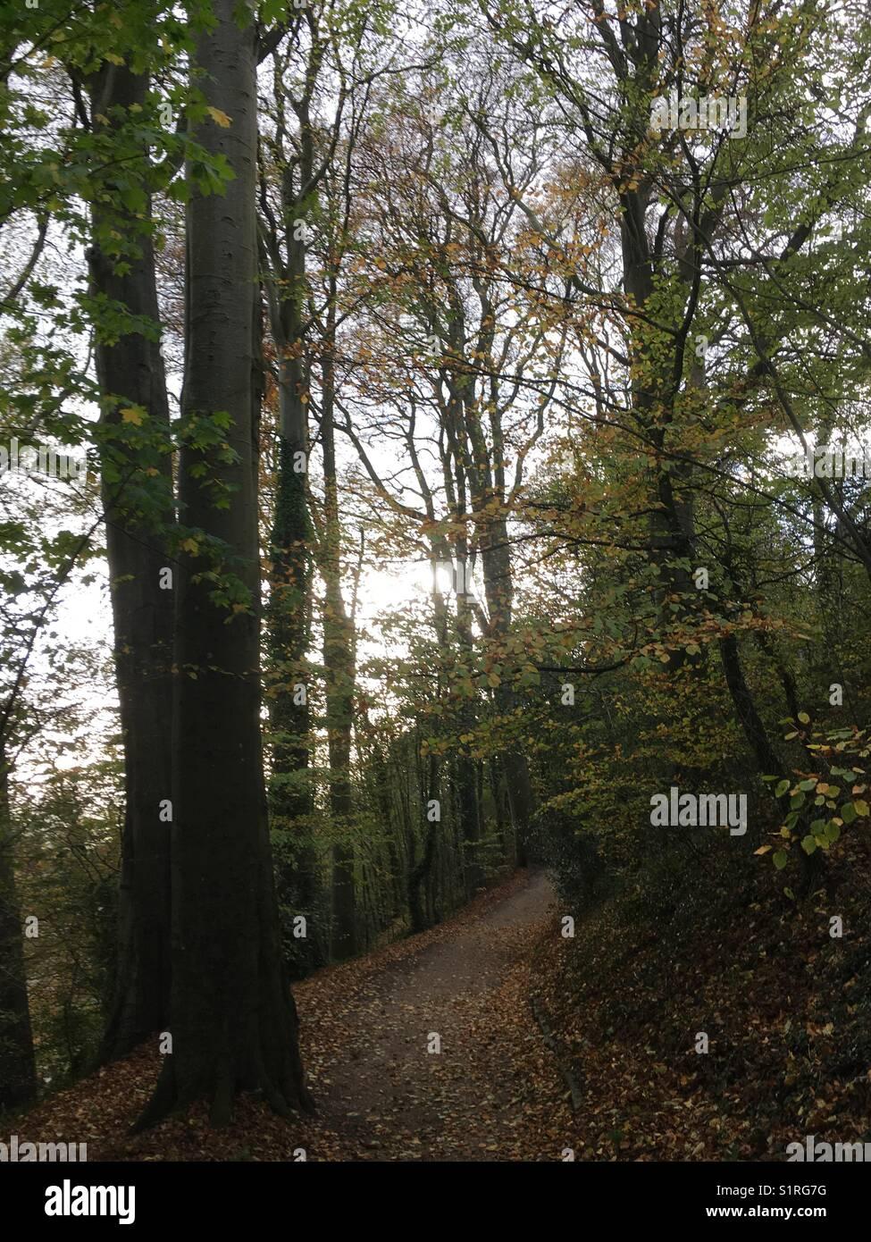 Woodland Walk, Shaftesbury - Stock Image
