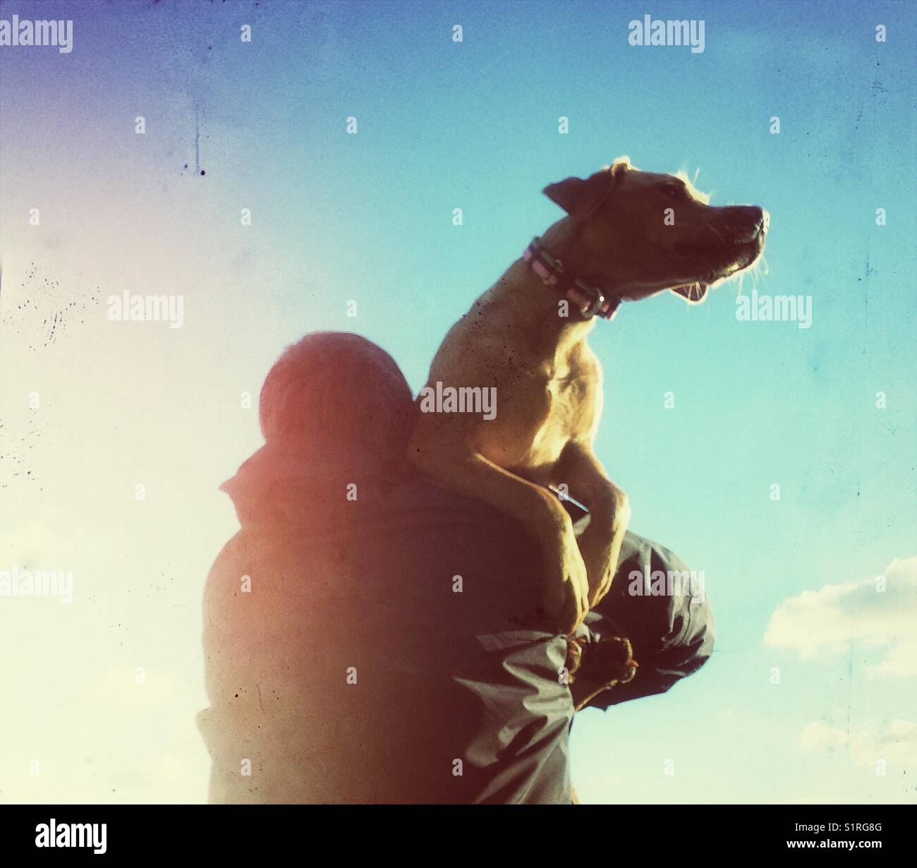 A strong man carrying his injured dog home and onto the sunset - Stock Image