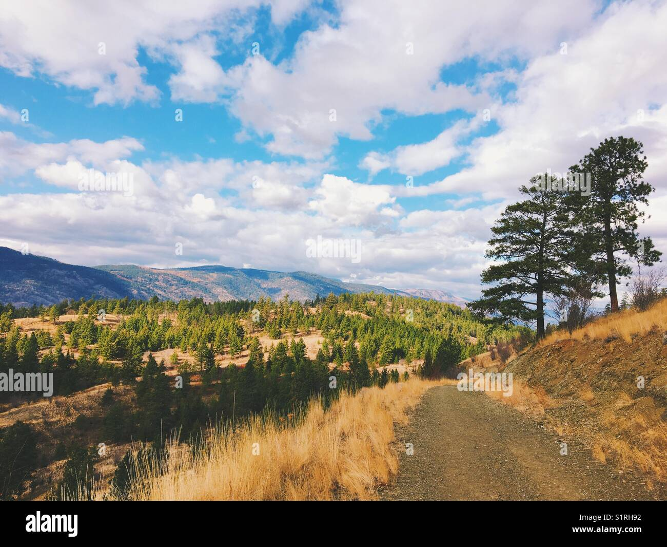 Autumn landscape under a cheerful blue sky with white clouds. An empty trail with trees on the side and hills in - Stock Image