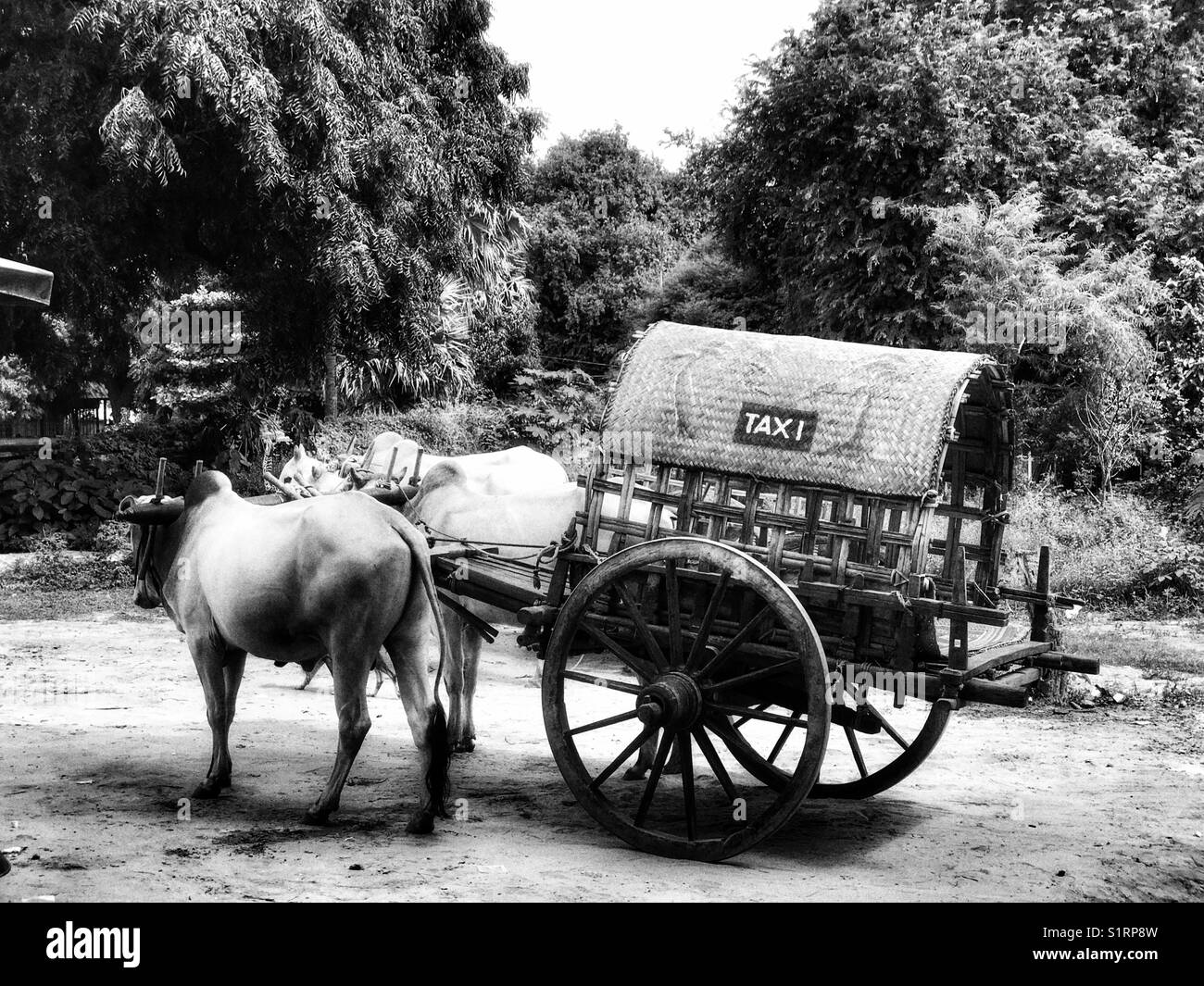 Oxen Taxi in Mandalay, Myanmar - Stock Image