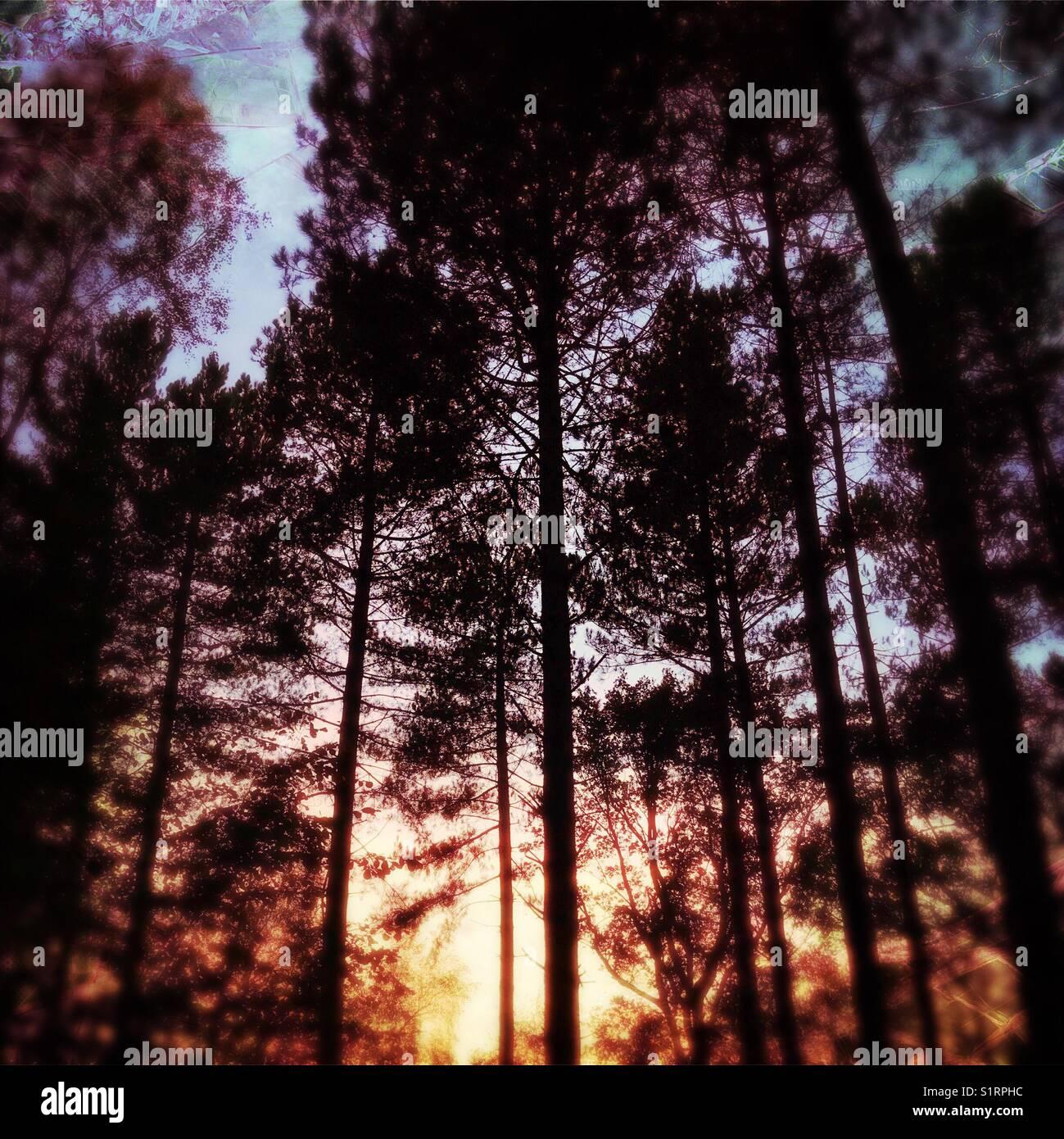 Woodland sunset Stock Photo