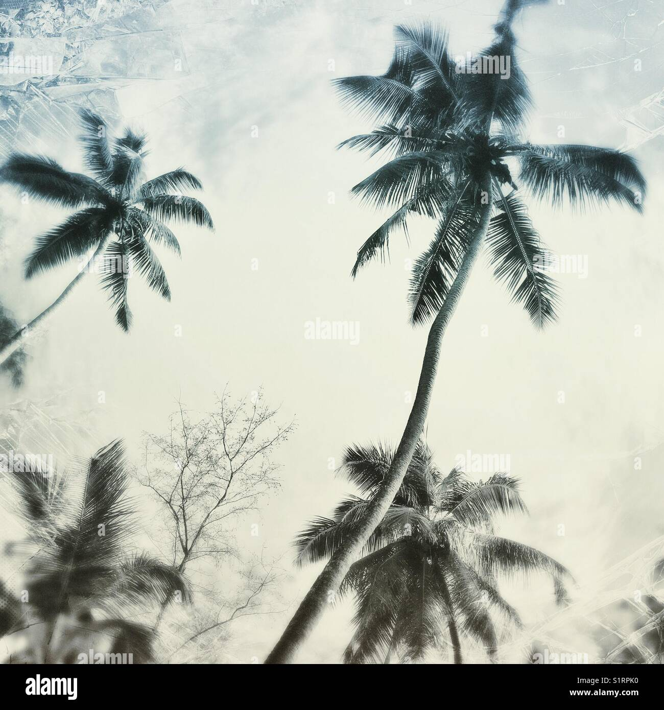 Abstract tropical palms Stock Photo