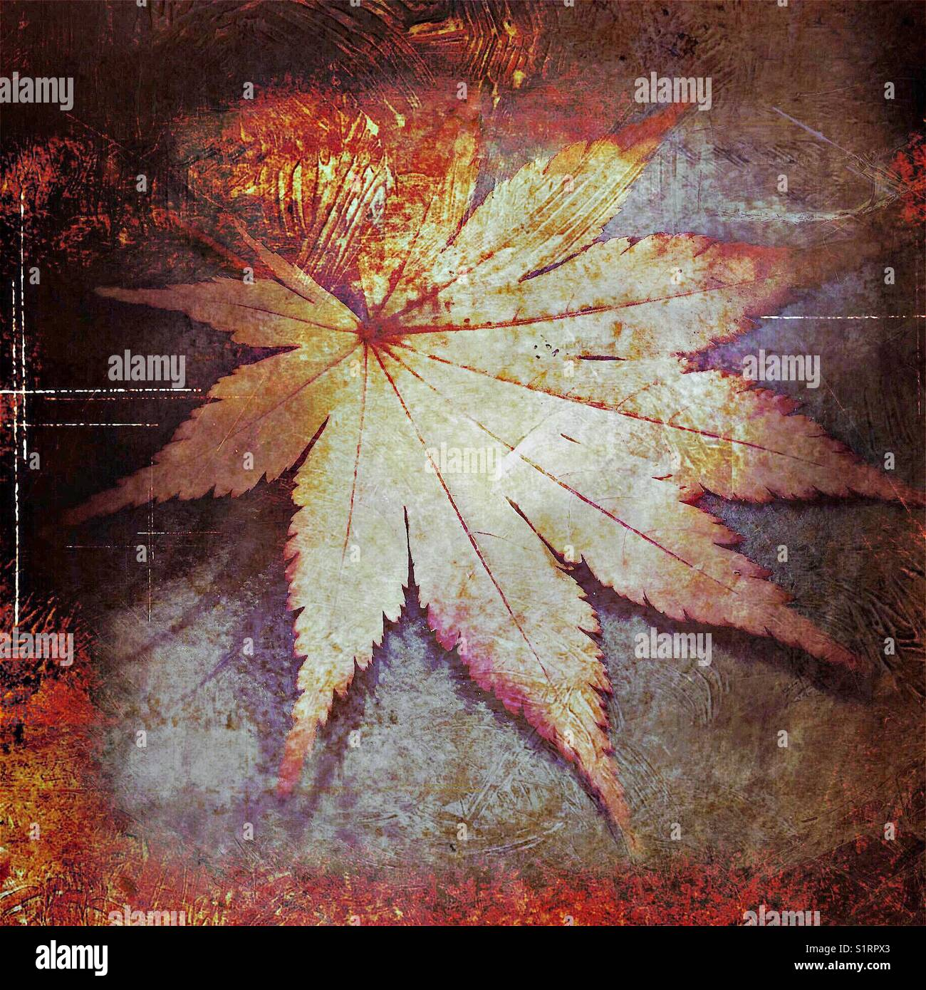Abstract grunge maple leafStock Photo
