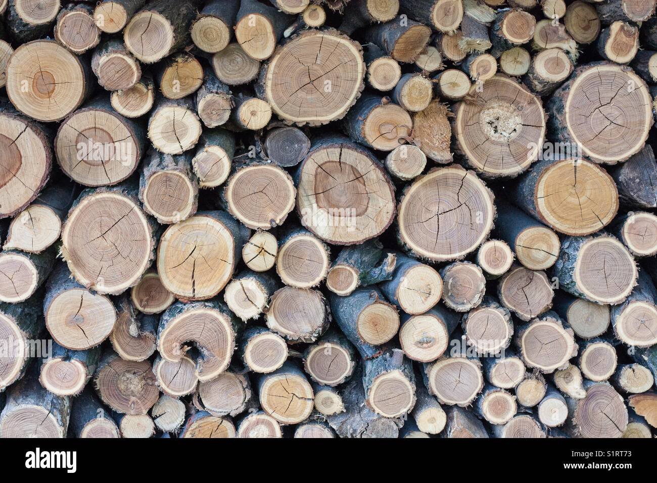 Abstract composition of wood log pile. A mosaico of wood stocks, ready to burn into the fireplace, during autumn Stock Photo