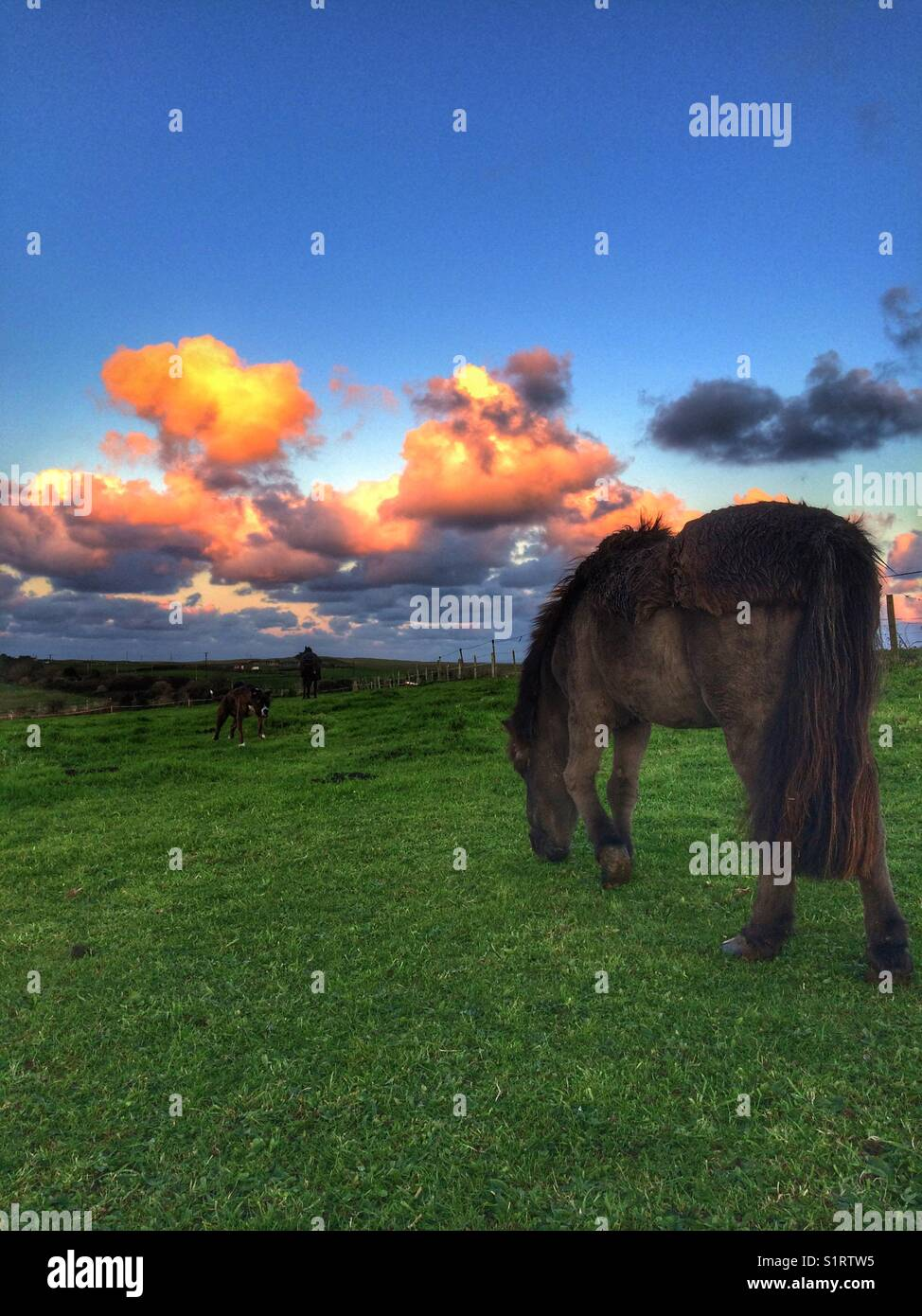 Pony at grass turnout is best - Stock Image