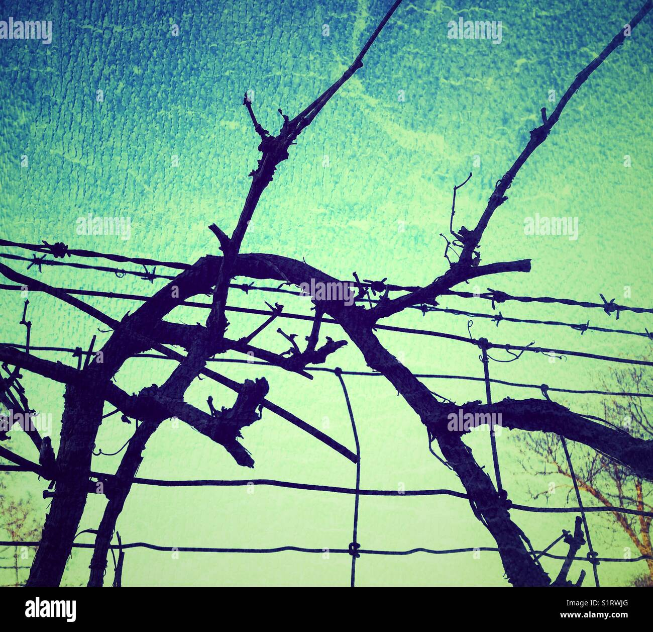 Vinyl branches twisting over barbed wire fence at dusk - Stock Image