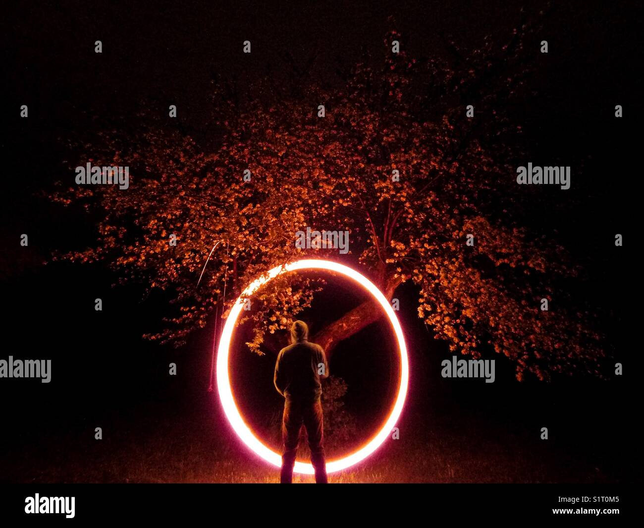 Ring of fire apple tree - Stock Image