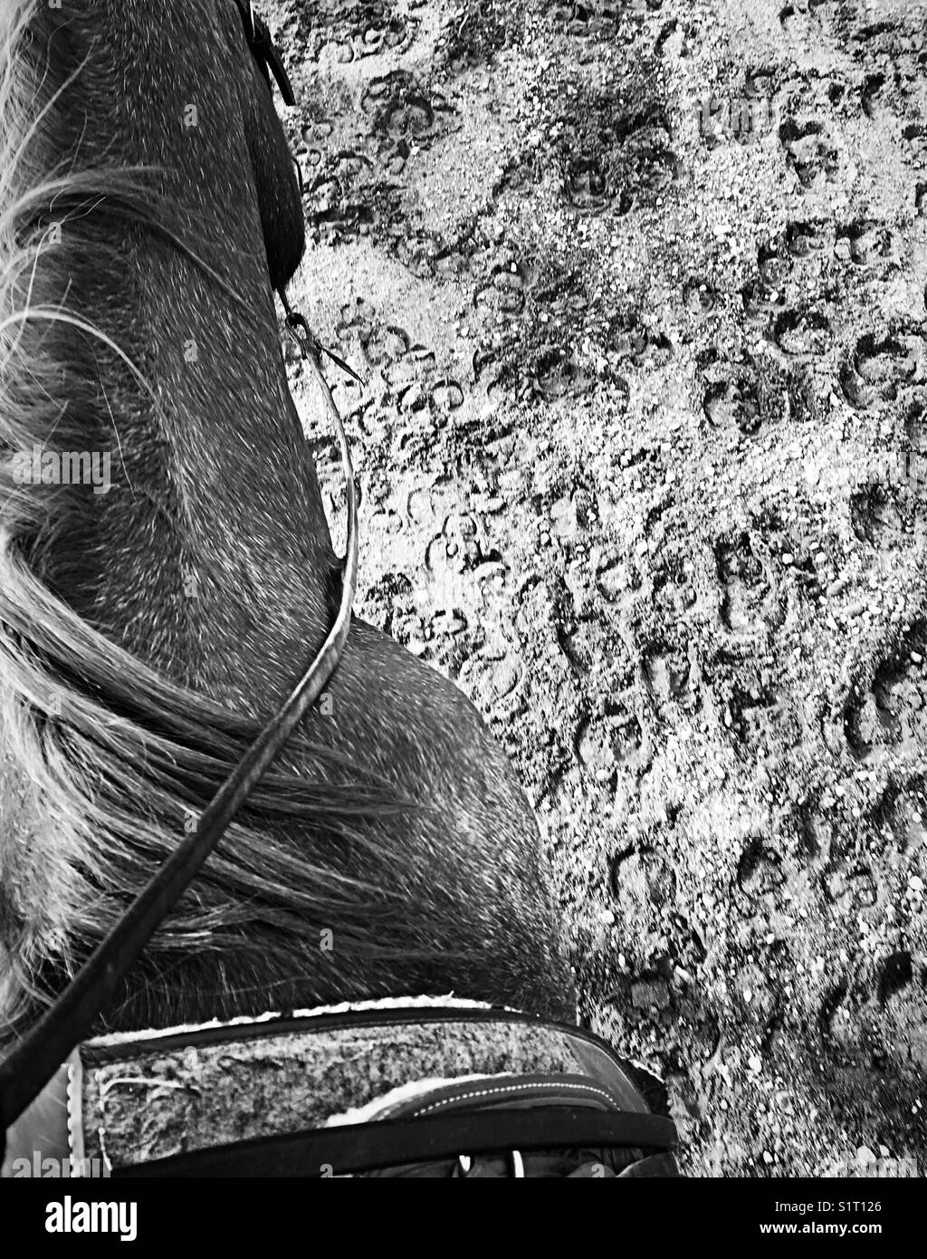 Black And White Horse Saddle And Cow Hoof Prints Stock Photo Alamy