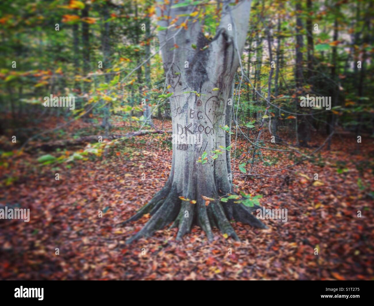 Tree carved with names and hearts in autumn foliage. - Stock Image