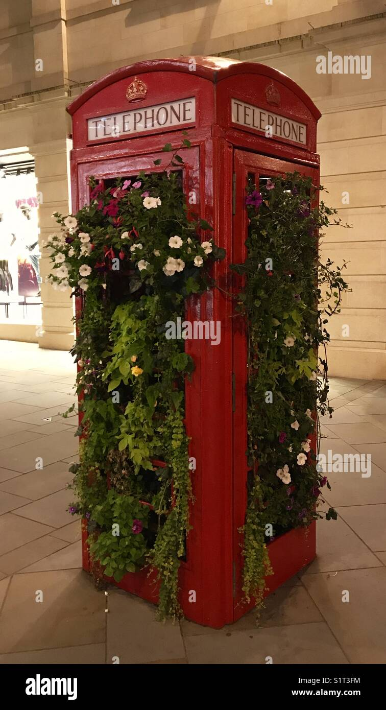 British telephone box in Bath filled with flowers - Stock Image