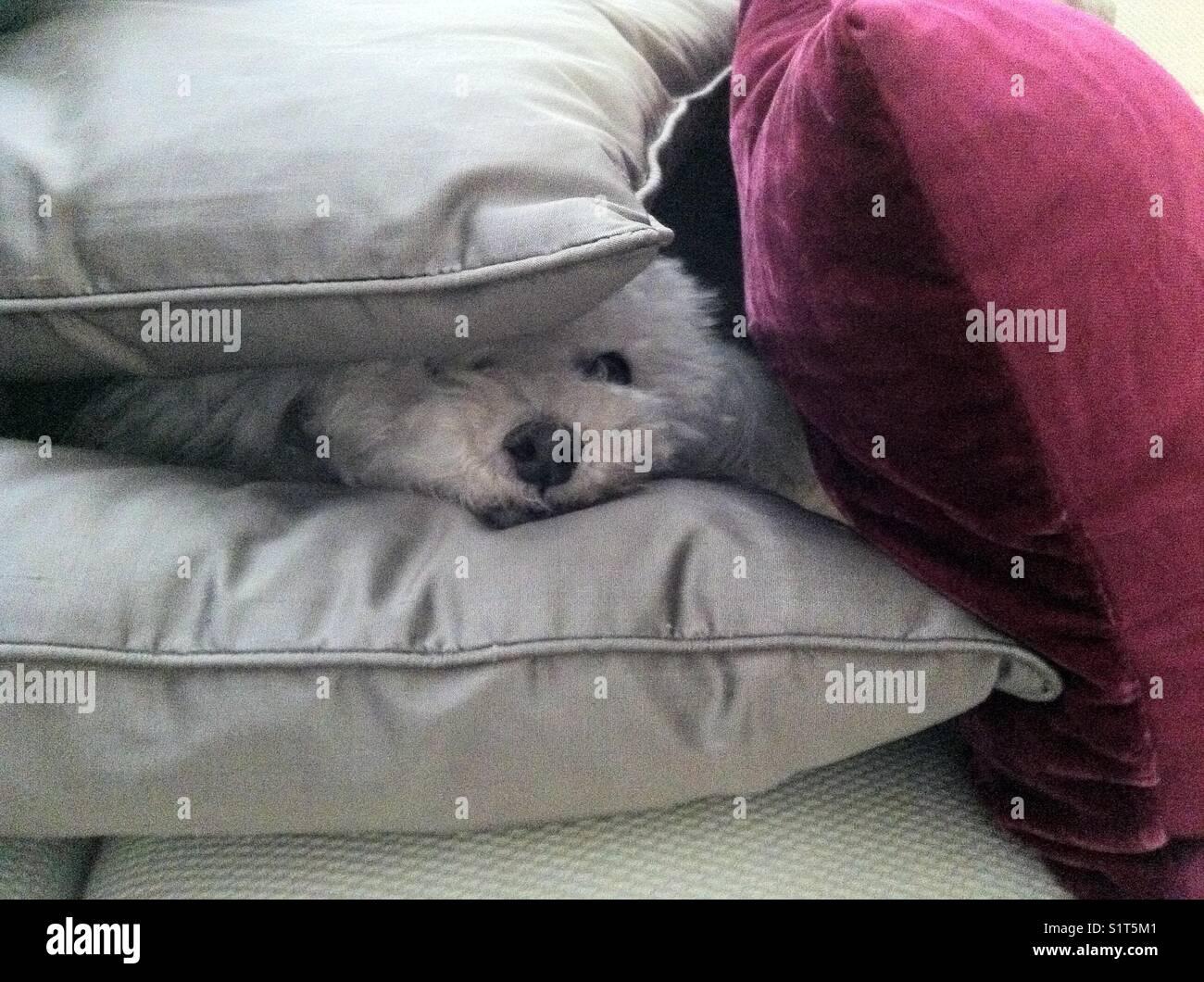 Hiding - Stock Image
