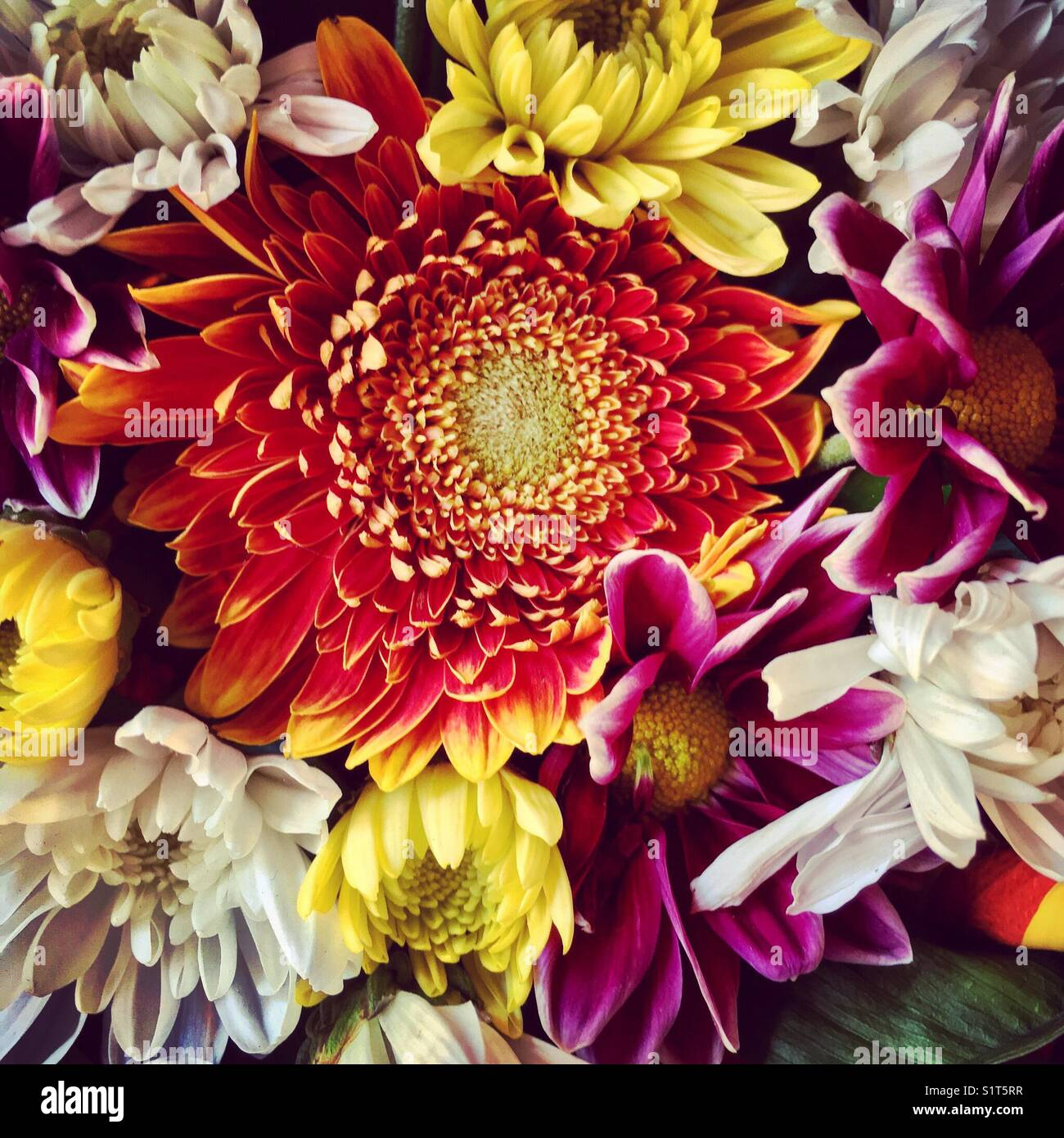 Colorful flowers Stock Photo: 310932715 - Alamy