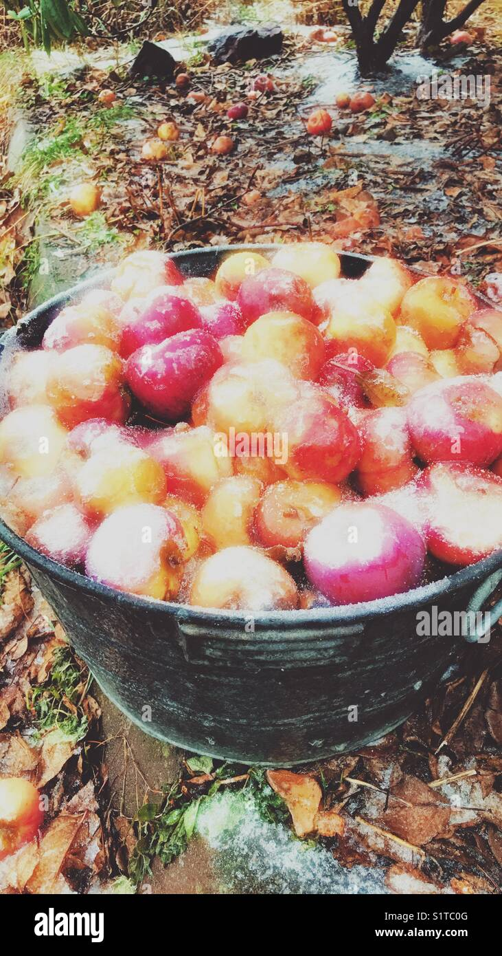 ice cream apples in a basin outside - Stock Image