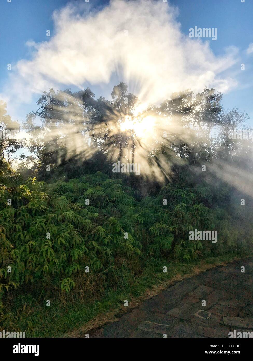 Steam vents - Hawaii - Stock Image