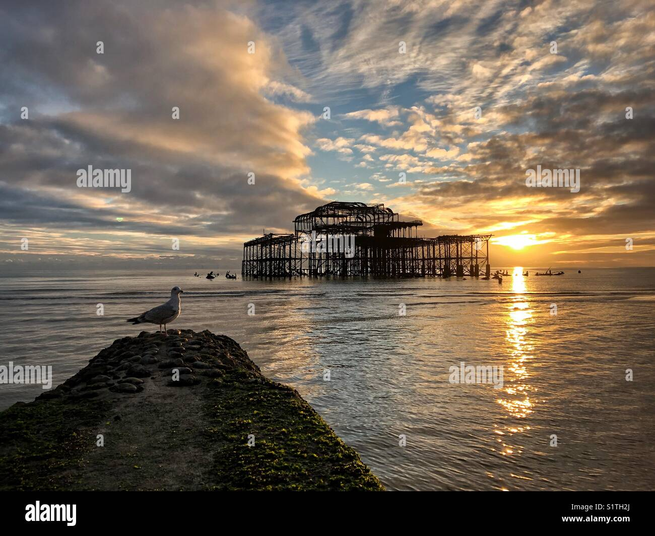 Seagull watching the sunset behind the West Pier in Brighton beach - Stock Image