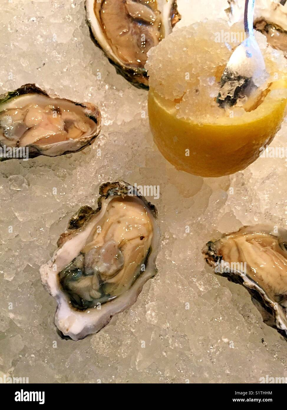 Raw oysters on the half shell dish at upscale New York City Stock