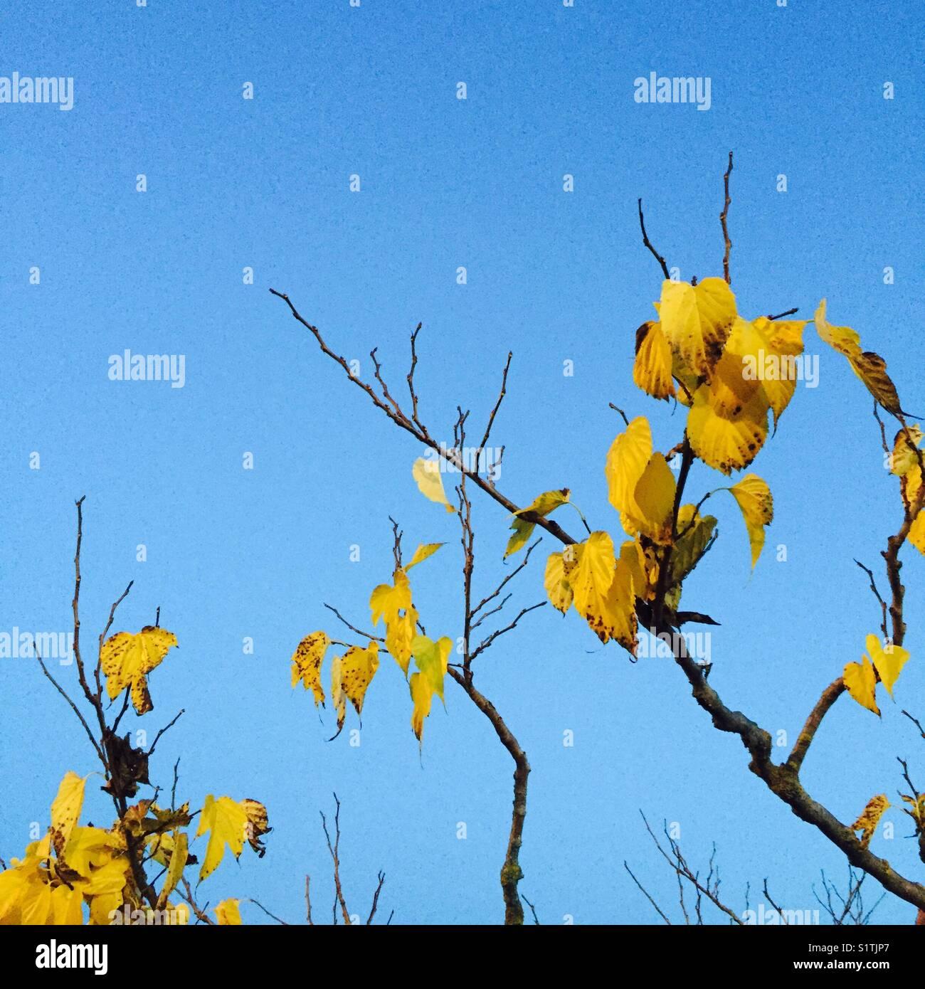 Automne - Stock Image