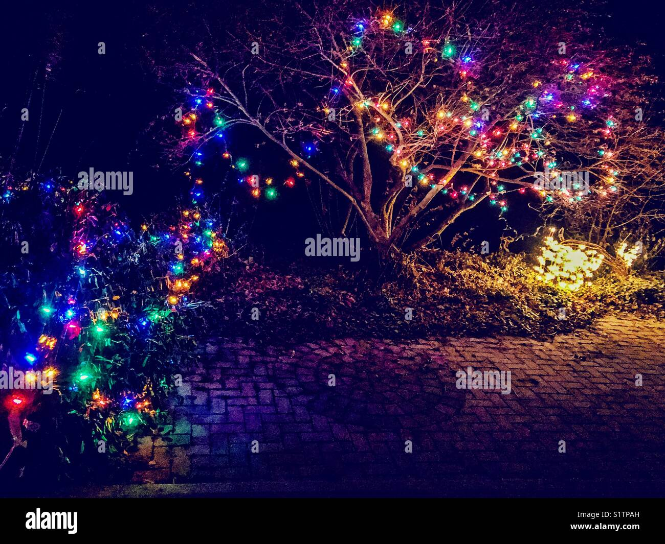 Multicoloured Christmas Lights Hung On And Around A Tree And Bush In