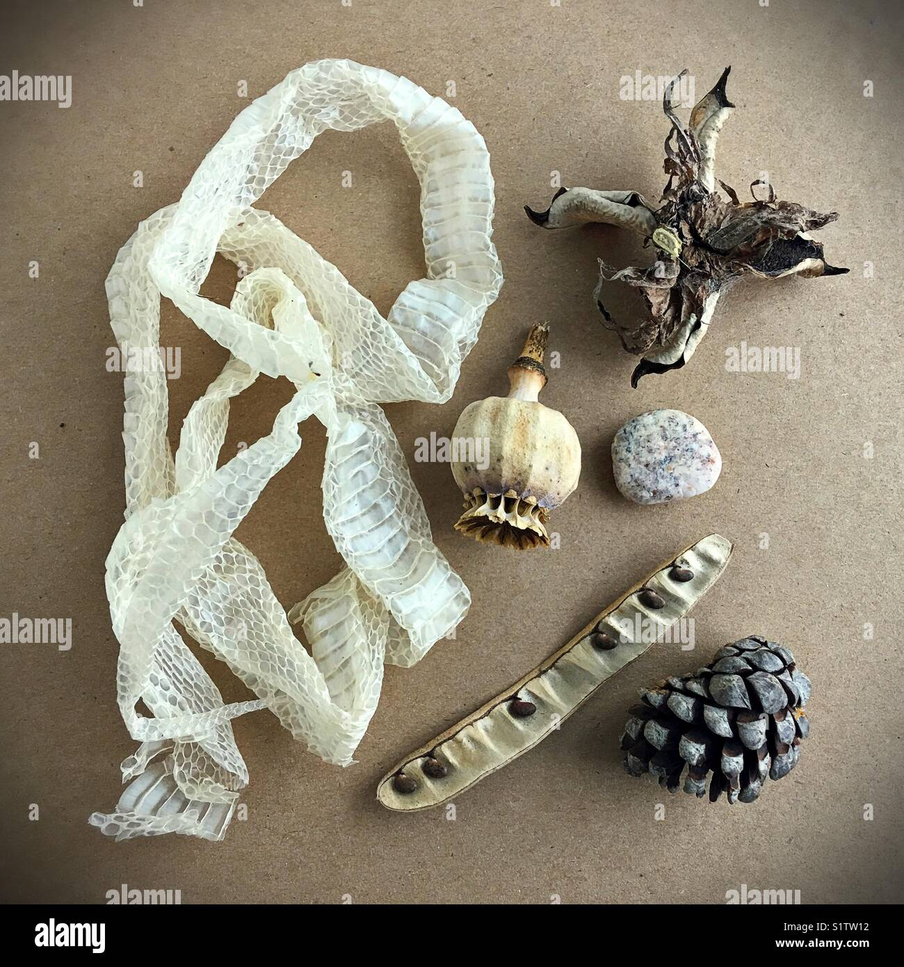 A still life of objects from nature. - Stock Image