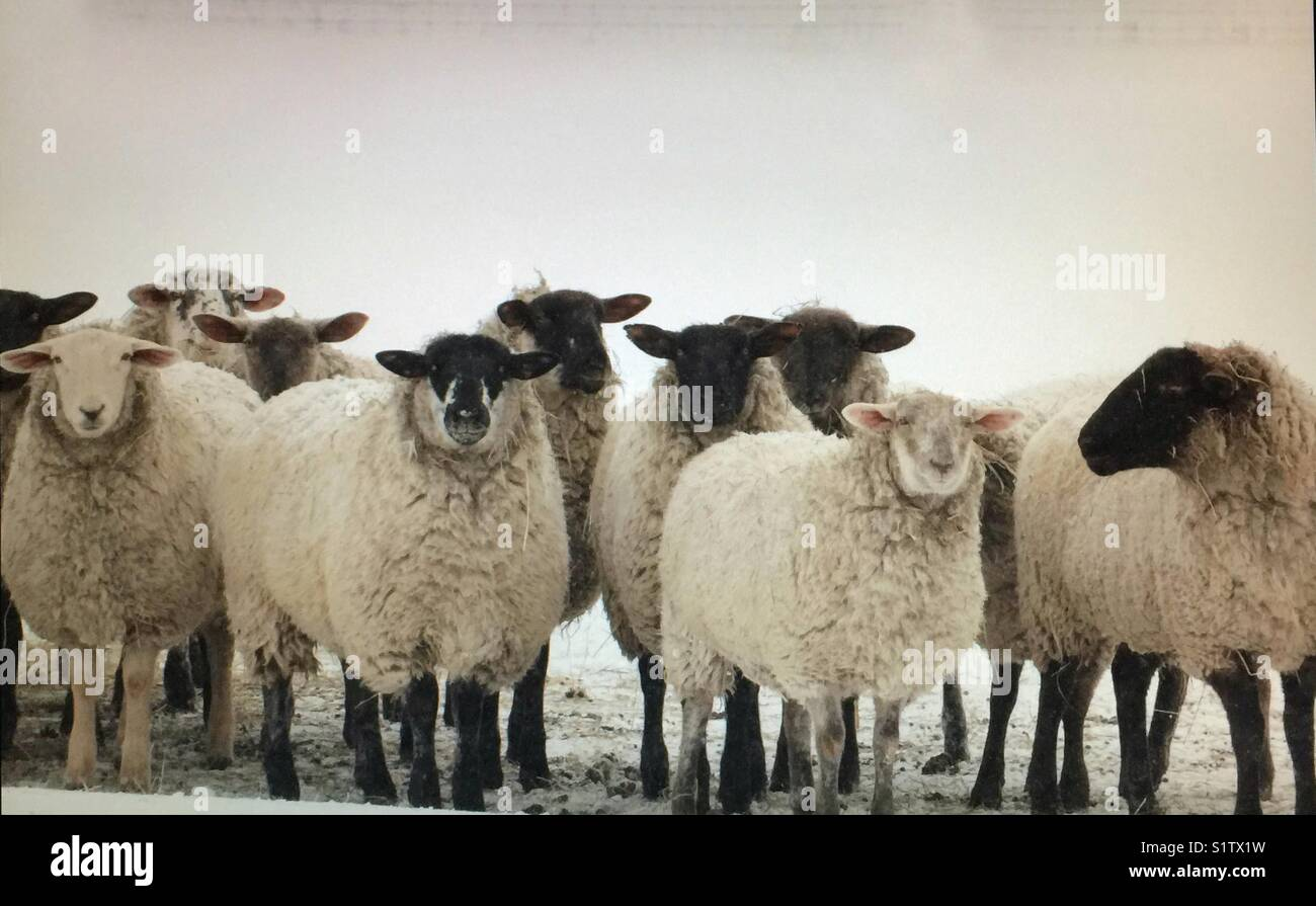 Curious onlookers - Stock Image