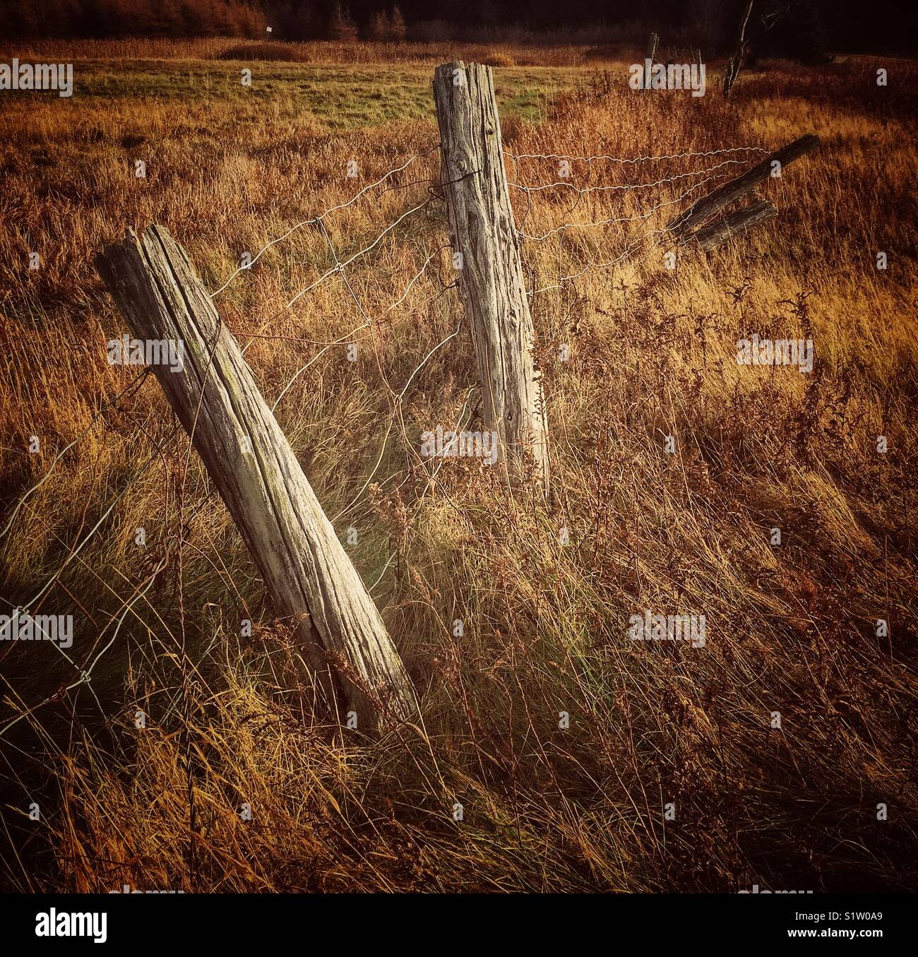 Old barb wire farm fence. - Stock Image