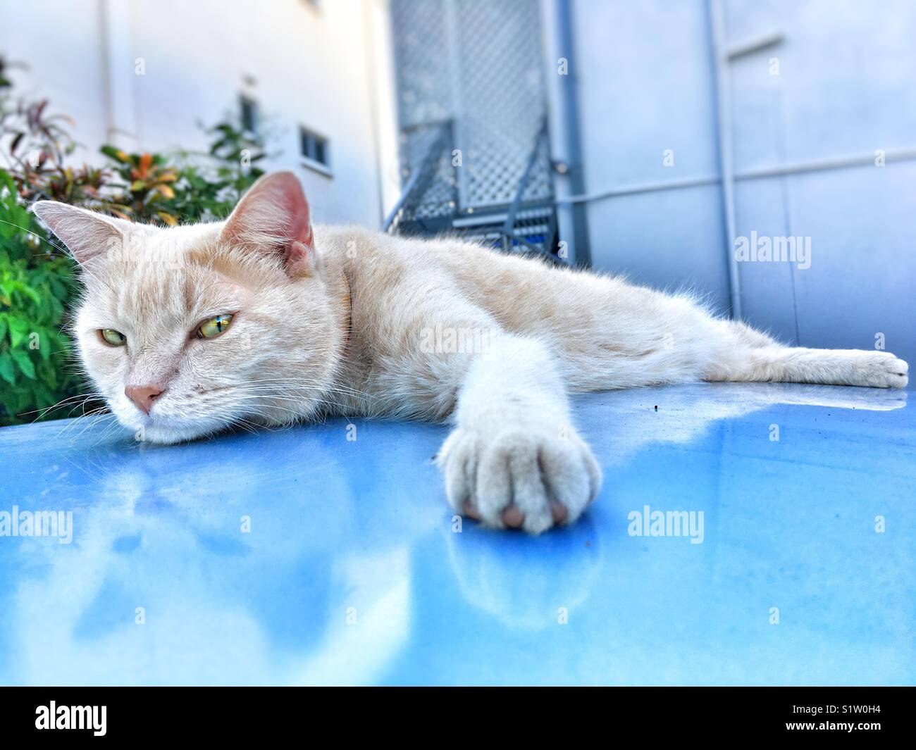 Cat on the roof of a car. - Stock Image