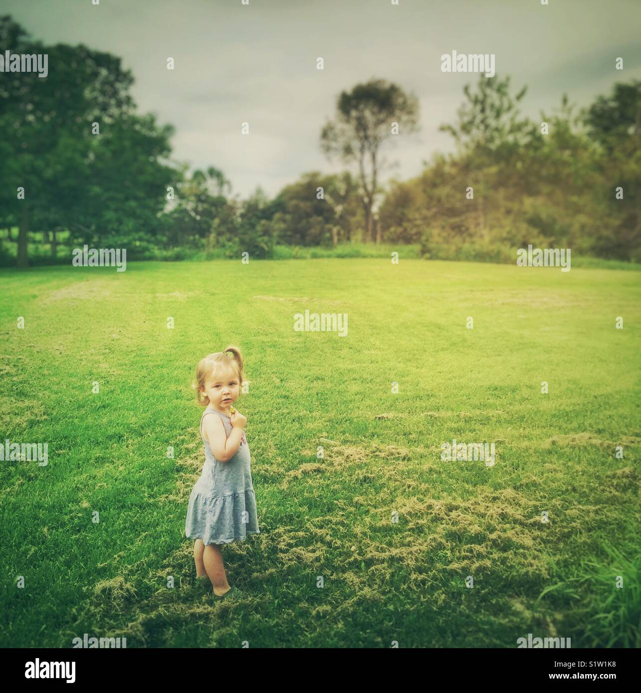 Toddler girl standing in grassy field with trees in the background - Stock Image