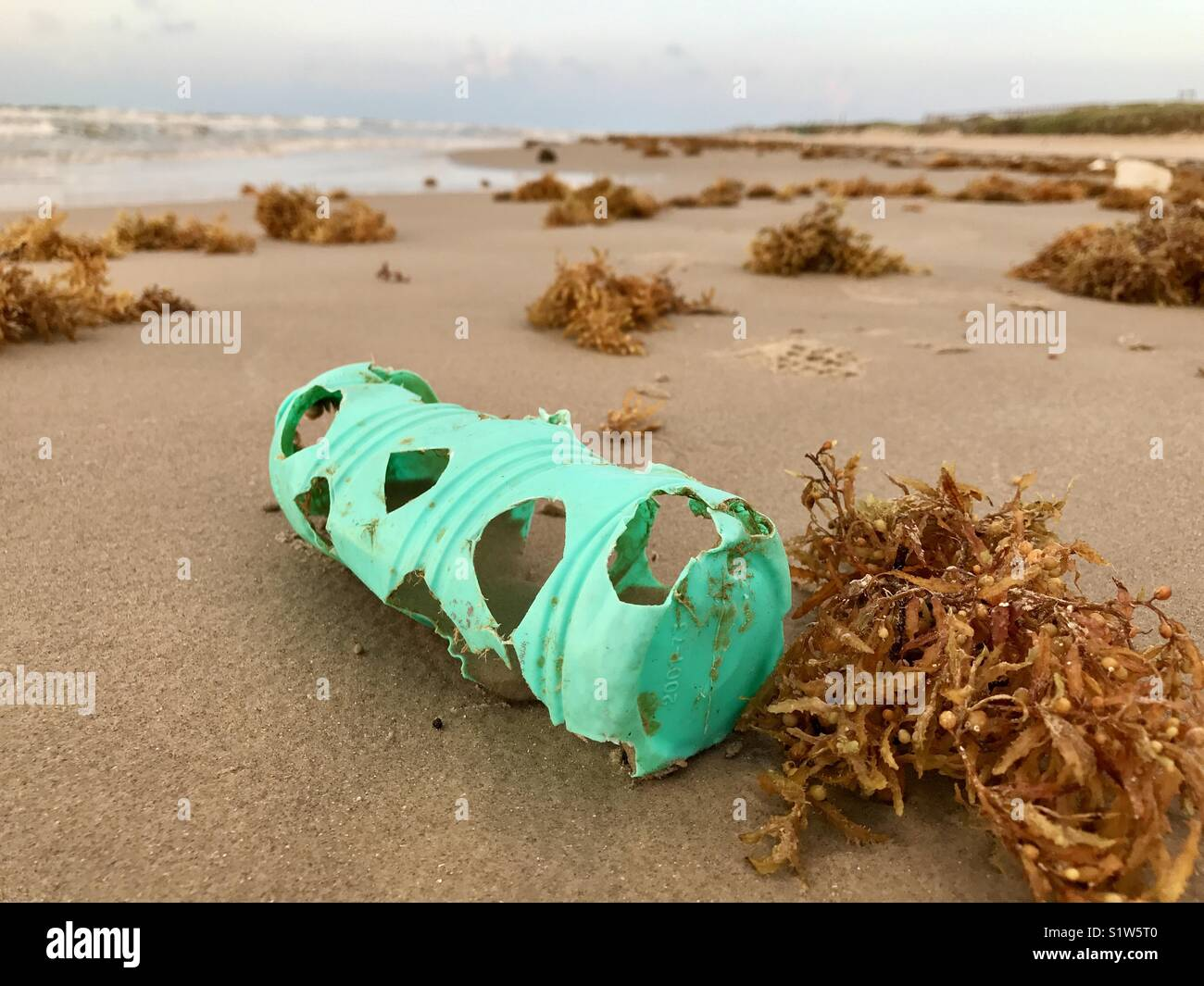 Turtle bites in plastic bottle on beach - Stock Image