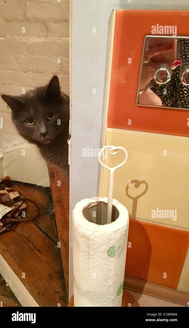 Cheeky cat poking its head around the corner - Stock Image