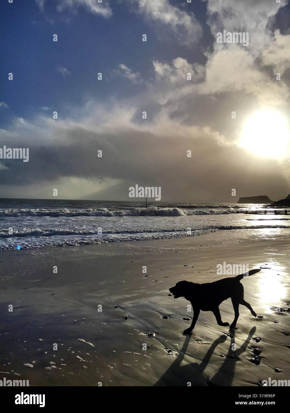Dog on dawlish beach - Stock Image
