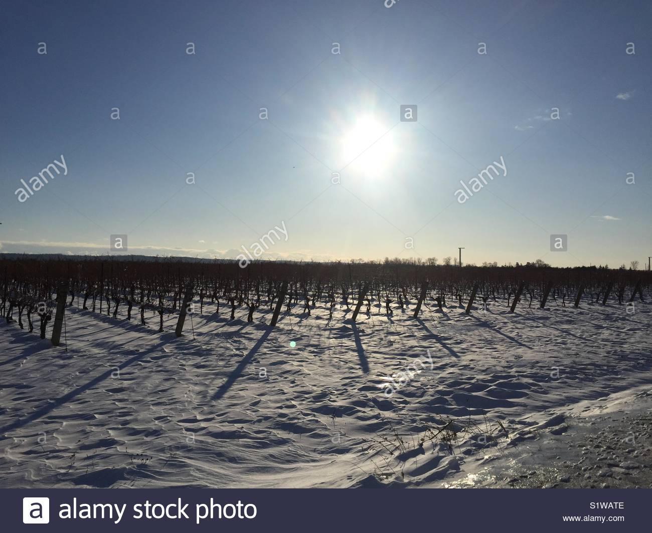 Niagara Wine Region Stock Photos Amp Niagara Wine Region