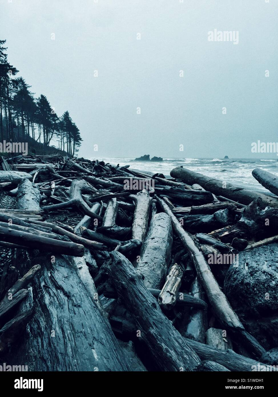 Piles of driftwood left on Ruby Beach after winter storms - Stock Image