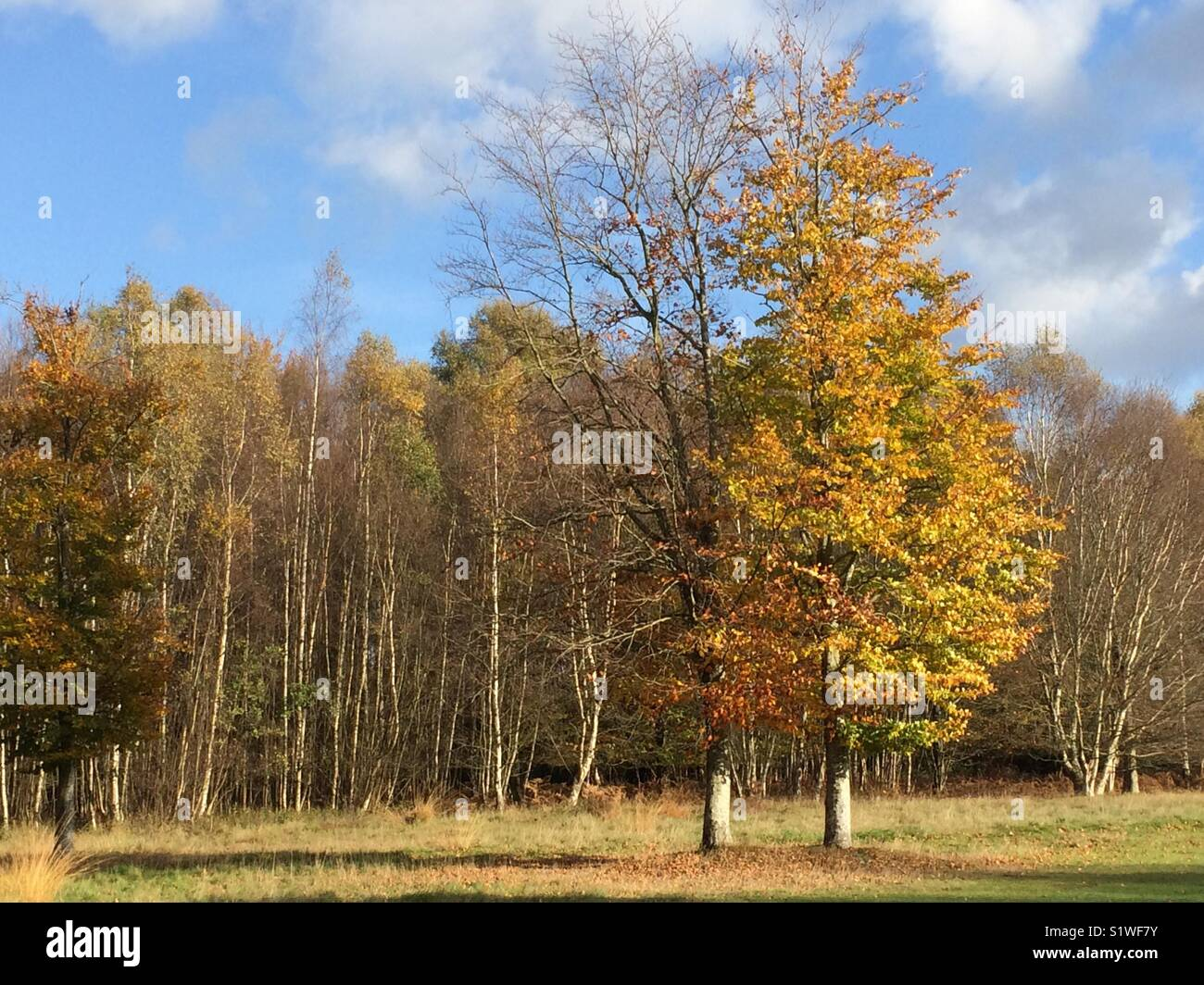 Autumn colours on trees at Paultons Golf course near Romsey, Hampshire, UK Stock Photo