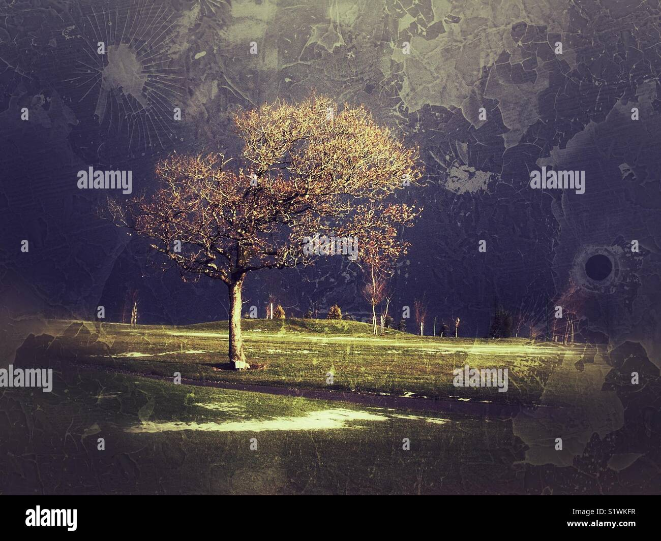 Lone tree on golf course Stock Photo