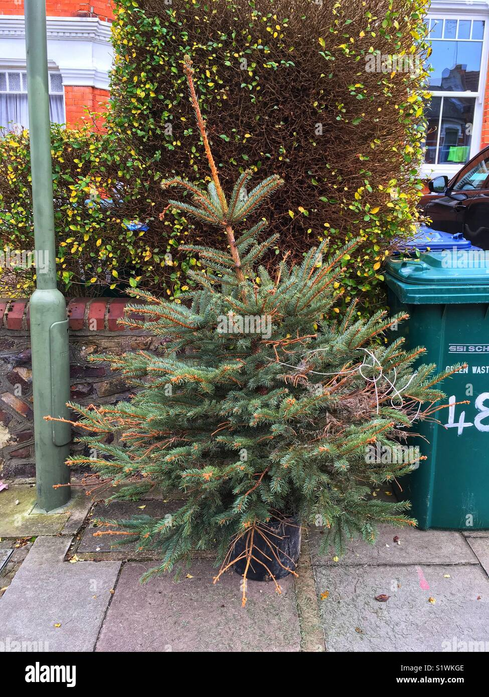 A Discarded Christmas Tree Outside A House In Muswell Hill In London 7 Days After The Epiphany On January 13 2018