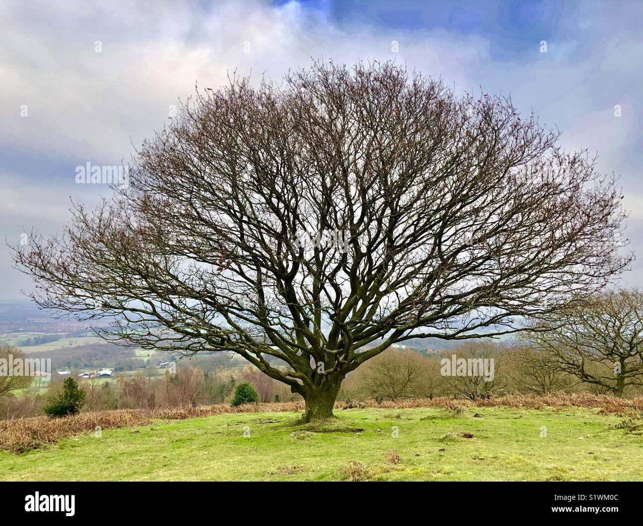 Leafless tree on a clear winter day overlooking Leicester from Beacon Hill - Stock Image