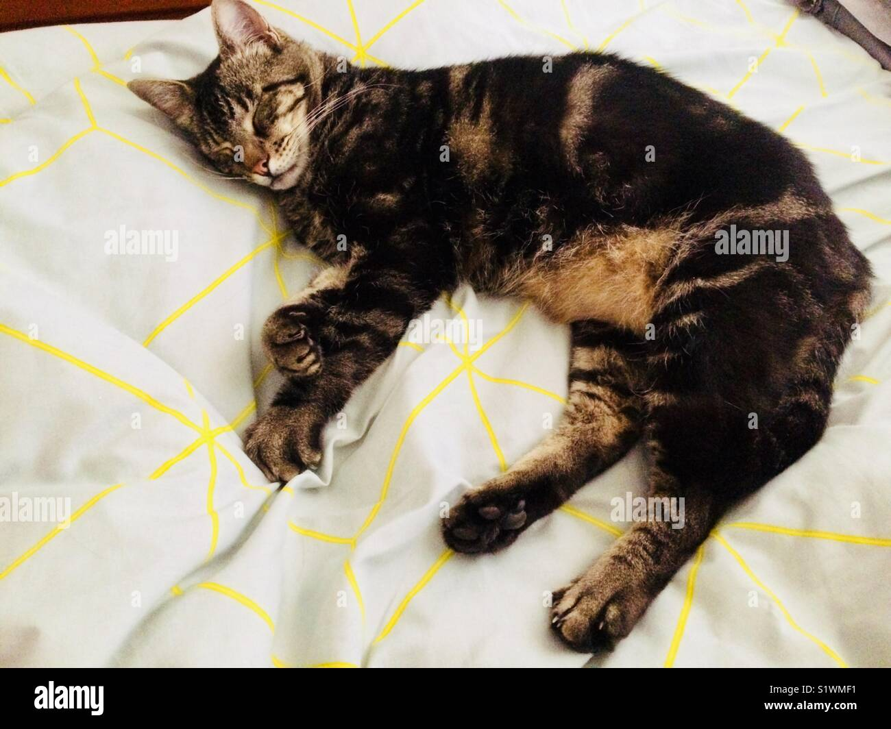 Cat laying on bed edited. - Stock Image