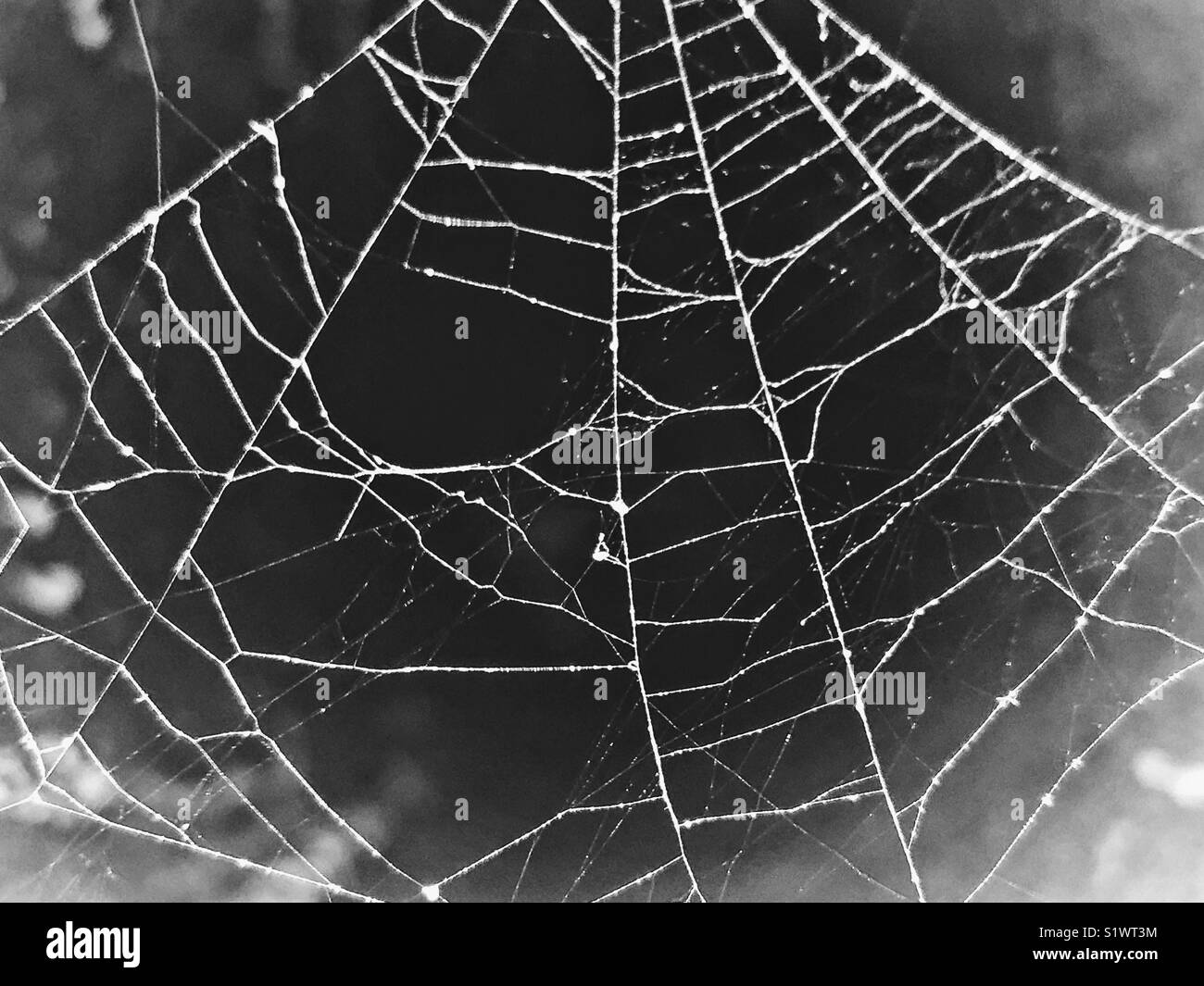 spider web design black and white stock photos images alamy