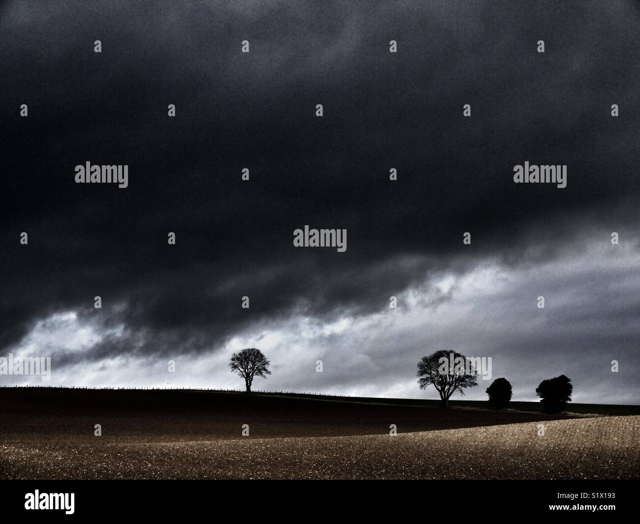 Trees in a field with dark stormy sky, East coast of Scotland, Angus. Stock Photo