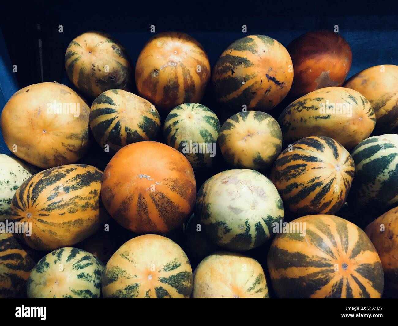 Vegetable Shopping - Stock Image