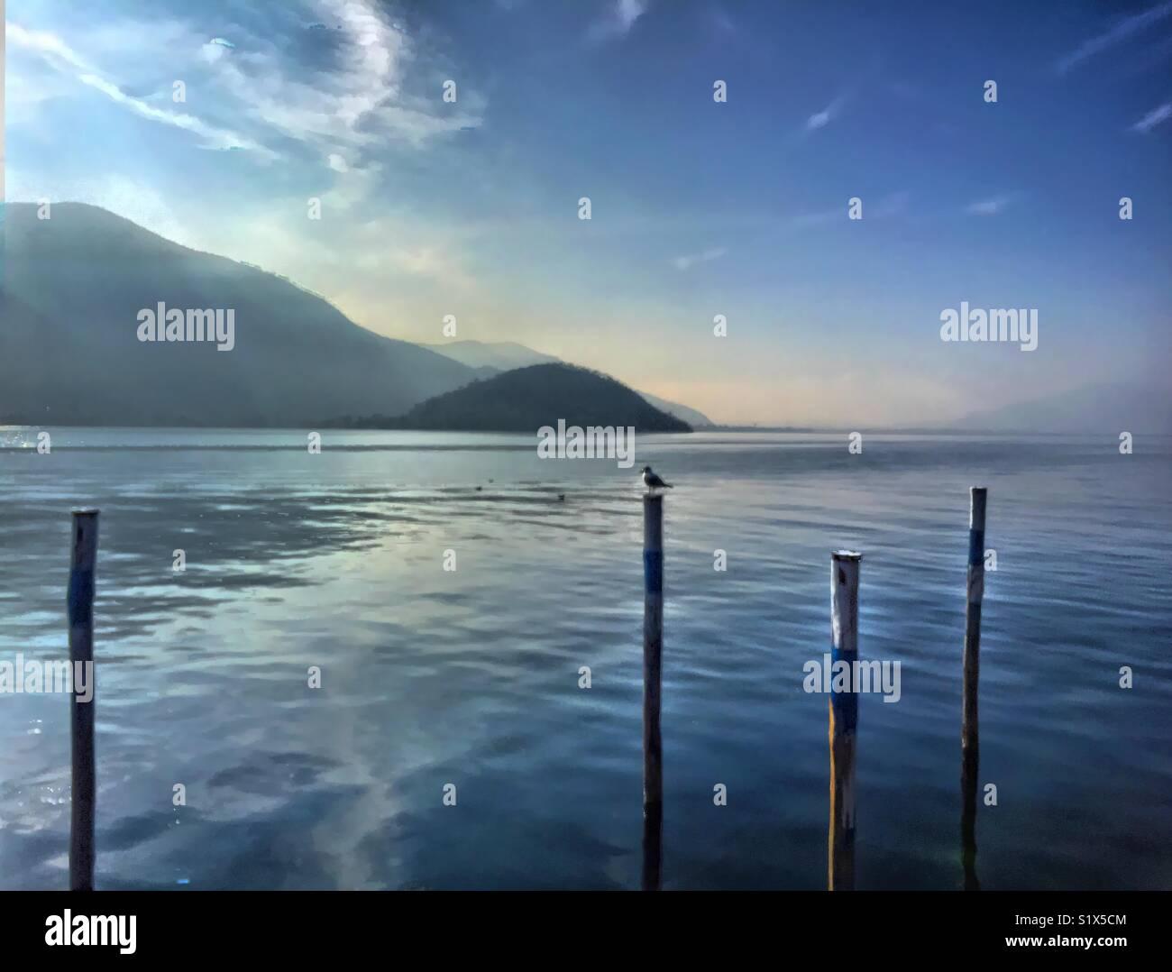 One seagull at iseo lake, italy. Un gabbiano al lago d'Iseo. Italia - Stock Image