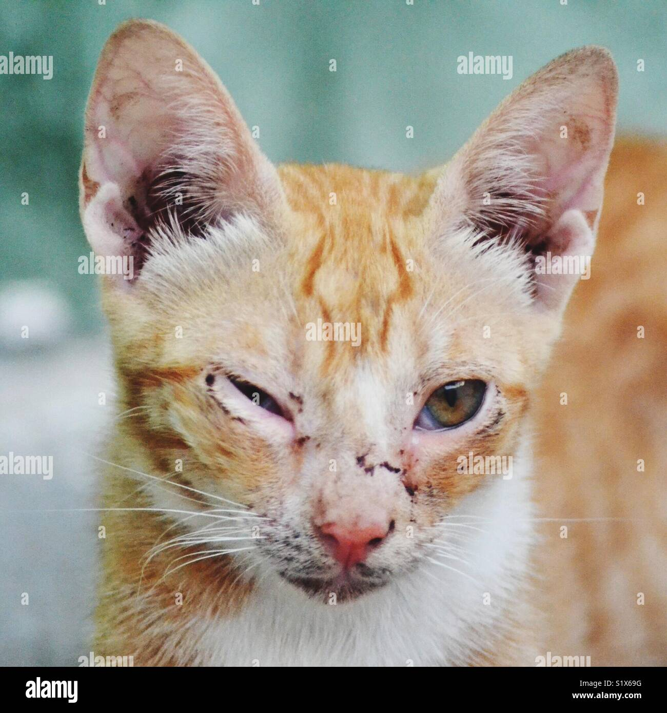 Winking Cat - Stock Image